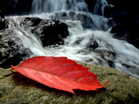 Waterfall-20021027-1356-Fuji-Haper's Ferry West Virginia-Red Leaf Waterfall.jpg